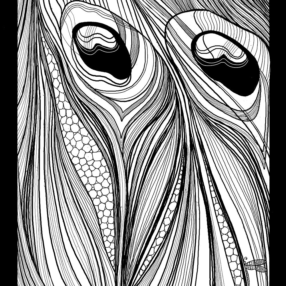 ill_Peacock CU 13 April